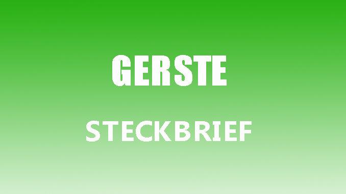 Teaserbild - Gerste Steckbrief