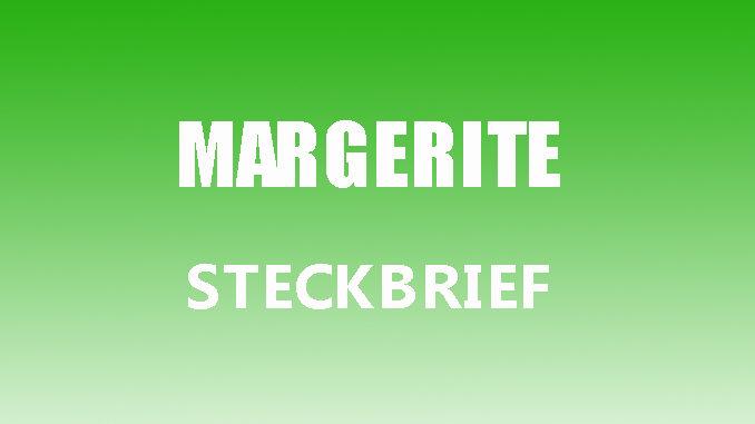 Teaserbild - Margerite Steckbrief