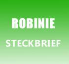 Robinie Steckbrief