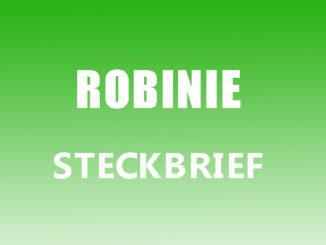 Teaserbild - Robinie Steckbrief