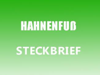 Teaserbild - Hahnenfuß Steckbrief