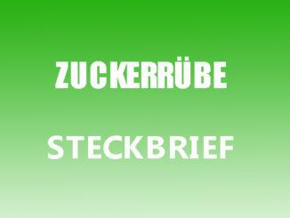 Teaserbild - Zuckerrübe Steckbrief