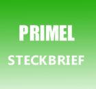 Primel Steckbrief
