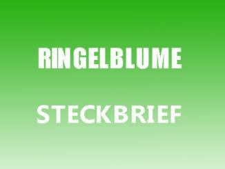 Teaserbild - Ringelblume Steckbrief