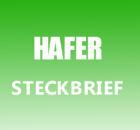 Hafer Steckbrief