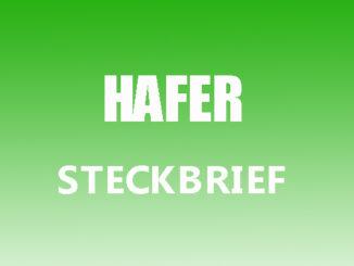 Teaserbild - Hafer Steckbrief