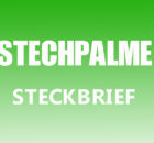 Stechpalme Steckbrief