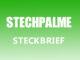 Teaserbild - Stechpalme Steckbrief